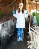 Κτηνίατρος γυναικών στο χοιροστάσιο Στοκ φωτογραφία με δικαίωμα ελεύθερης χρήσης