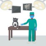 Κτηνίατρος με μια γάτα σε ένα ιατρικό γραφείο ελεύθερη απεικόνιση δικαιώματος