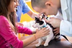Κτηνίατρος που εξετάζει την ακρόαση της γάτας στον κτηνίατρο κινούμενο στοκ φωτογραφία