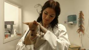 Κτηνίατρος που εξετάζει το σκυλί στο γραφείο της απόθεμα βίντεο
