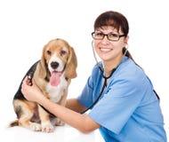 Κτηνίατρος που ελέγχει το ποσοστό καρδιών ενός κουταβιού Απομονωμένος στο άσπρο backgr Στοκ φωτογραφία με δικαίωμα ελεύθερης χρήσης