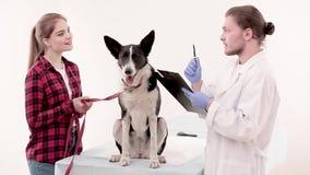 Κτηνίατρος που κάνει τις σημειώσεις στην ιατρική κάρτα του σκυλιού απόθεμα βίντεο
