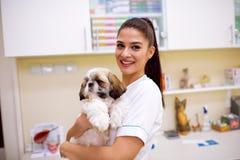 Κτηνίατρος που κρατά λίγο σκυλί στο ασθενοφόρο κατοικίδιων ζώων Στοκ Εικόνες
