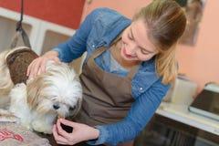 Κτηνίατρος που προσφέρει το χάπι στο σκυλί Στοκ φωτογραφία με δικαίωμα ελεύθερης χρήσης
