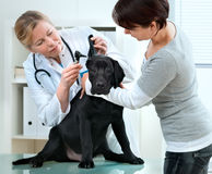 κτηνίατρος Στοκ Εικόνα