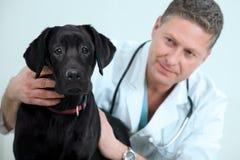 κτηνίατρος στοκ φωτογραφία με δικαίωμα ελεύθερης χρήσης