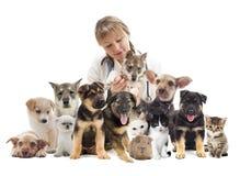 κτηνίατρος Στοκ εικόνες με δικαίωμα ελεύθερης χρήσης