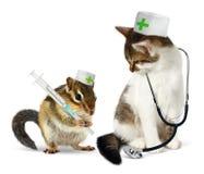 Κτηνιατρική έννοια, αστείες chipmunk και γάτα με το phonendoscope α Στοκ εικόνες με δικαίωμα ελεύθερης χρήσης