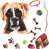 Κτηνιατρική εξάρτηση που περιλαμβάνει τον μπόξερ και τα εξαρτήματα για τα σκυλιά, waterc Στοκ εικόνα με δικαίωμα ελεύθερης χρήσης