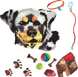 Κτηνιατρική εξάρτηση που περιλαμβάνει Rottweiler και τα εξαρτήματα για τα σκυλιά, W Στοκ εικόνες με δικαίωμα ελεύθερης χρήσης