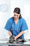 Κτηνιατρική φροντίδα μιας χαριτωμένης γάτας στοκ φωτογραφίες με δικαίωμα ελεύθερης χρήσης