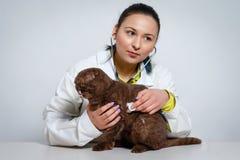 Κτηνιατρικός γιατρός με το στηθοσκόπιο που ελέγχει επάνω τη γάτα έννοια ιατρικής, κατοικίδιων ζώων, ζώων και ανθρώπων στοκ εικόνες