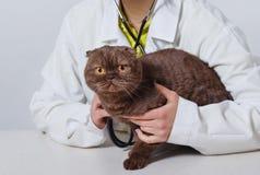 Κτηνιατρικός γιατρός με το στηθοσκόπιο που ελέγχει επάνω τη γάτα έννοια ιατρικής, κατοικίδιων ζώων, ζώων και ανθρώπων στοκ φωτογραφία με δικαίωμα ελεύθερης χρήσης