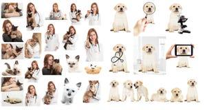 Κτηνιατρικός γιατρός Στοκ εικόνες με δικαίωμα ελεύθερης χρήσης