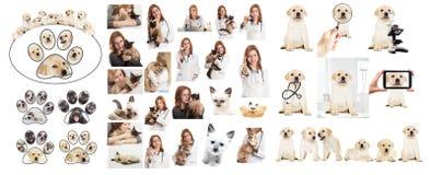 Κτηνιατρικός γιατρός Στοκ φωτογραφίες με δικαίωμα ελεύθερης χρήσης