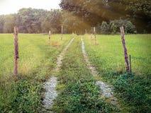 Κτυπημένη διαδρομή μέσω του λιβαδιού με τις ακτίνες του ligh Στοκ Εικόνες