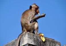 Κτύπημα Saen, Ταϊλάνδη: Πίθηκος που τρώει την μπανάνα Στοκ φωτογραφία με δικαίωμα ελεύθερης χρήσης