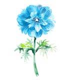Κυανικό anemone watercolor όμορφο λουλούδι Στοκ Εικόνα