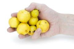 κυδώνι χεριών καρπών κίτριν&omicro Στοκ Φωτογραφία
