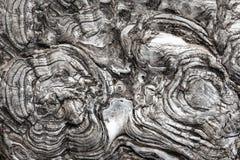 Κυκλικά και κυματιστά θεραπευμένα πριόνια δέντρων στοκ φωτογραφία με δικαίωμα ελεύθερης χρήσης