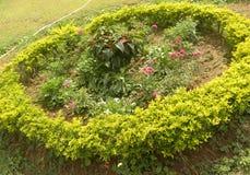 Κυκλικός κήπος με το erecta Duranta στοκ φωτογραφία με δικαίωμα ελεύθερης χρήσης