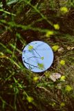Κυκλικός καθρέφτης σε έναν πράσινο τομέα με την πρασινάδα όλοι γύρω στοκ εικόνα