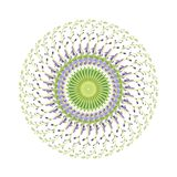Κυκλικό σχέδιο των λουλουδιών baptisia Στοκ Φωτογραφία