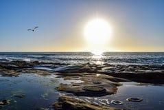 Κυκλικά σχέδια βράχου και Seagull στο ηλιοβασίλεμα στη Λα Χόγια, Καλιφόρνια Στοκ Εικόνες