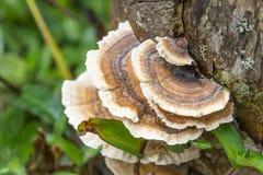 Κυκλική ένωση μανιταριών στο δέντρο Στοκ εικόνες με δικαίωμα ελεύθερης χρήσης