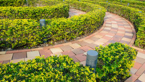Κυκλικός θάμνος περικοπών στον υπαίθριο κήπο Στοκ Εικόνες