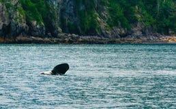 Κυματίζοντας βατραχοπέδιλο Orca στοκ φωτογραφία