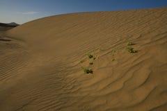 κυματισμένη ζωή άμμος μερι&kap Στοκ φωτογραφία με δικαίωμα ελεύθερης χρήσης