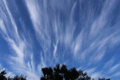 Κυματιστά σύννεφα με τα δέντρα σκιαγραφιών στο πρώτο πλάνο στοκ φωτογραφία