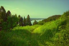 Κυματιστό νερό ποταμών και ο πράσινος sedge Μπους Στοκ εικόνα με δικαίωμα ελεύθερης χρήσης