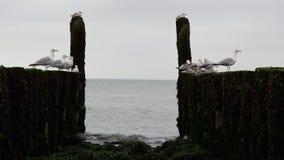 Κυματοθραύστες με seagulls στην ακτή της Βόρεια Θάλασσας Στοκ Φωτογραφίες