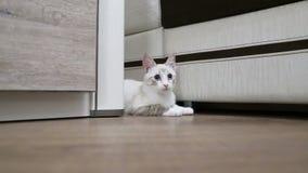 Κυνήγια νέα γατών από πίσω από το γραφείο φιλμ μικρού μήκους