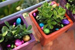 Κυνήγι αυγών Πάσχας Choclolate που κρύβεται στα φυτά γλαστρών Στοκ Φωτογραφίες