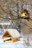 Κυνήγι γατών Στοκ εικόνα με δικαίωμα ελεύθερης χρήσης
