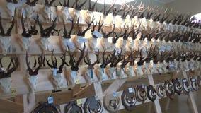 Κυνήγι κρανία και κέρατα τροπαίων †«στο μουσείο απόθεμα βίντεο