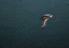 Κυνήγι πουλιών Στοκ φωτογραφία με δικαίωμα ελεύθερης χρήσης