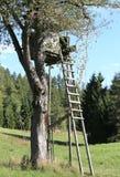 κυνήγι στο κυνήγι πέρα από ένα μεγάλο δέντρο με τα φύλλα Στοκ Εικόνες