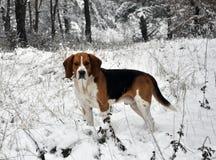 Κυνήγι του σκυλιού στο χειμερινό δάσος Στοκ φωτογραφίες με δικαίωμα ελεύθερης χρήσης
