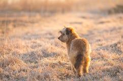 Κυνήγι του σκυλιού το ομιχλώδες πρωί Στοκ εικόνες με δικαίωμα ελεύθερης χρήσης