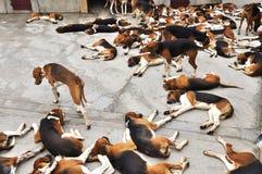 Κυνήγι των σκυλιών σε Cheverny Castle Στοκ εικόνα με δικαίωμα ελεύθερης χρήσης