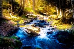 Κυνηγημένο δάσος Στοκ φωτογραφία με δικαίωμα ελεύθερης χρήσης