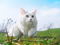 κυνηγός γατών Στοκ Εικόνα