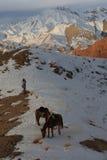 Κυνηγός και άλογα το χειμώνα στα βουνά Στοκ εικόνες με δικαίωμα ελεύθερης χρήσης