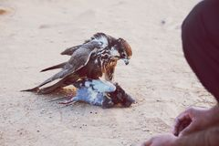 Κυνηγός πουλιών Στοκ Φωτογραφίες