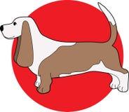 κυνηγόσκυλο μπασέ Στοκ φωτογραφίες με δικαίωμα ελεύθερης χρήσης
