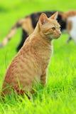 Κυνηγώντας γάτα Στοκ Εικόνα